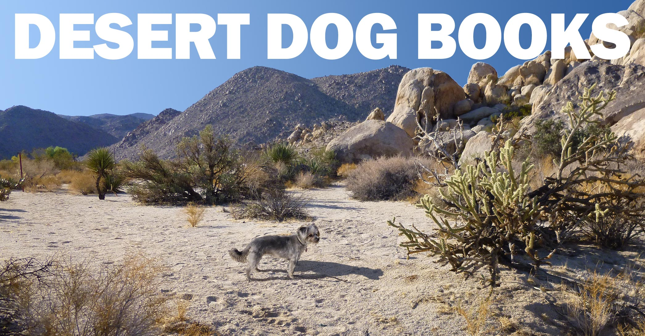 Desert Dog Books